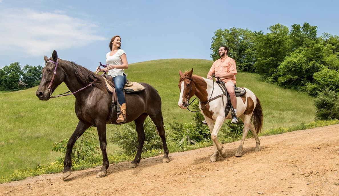 Horseriding Gallery 3 @1x