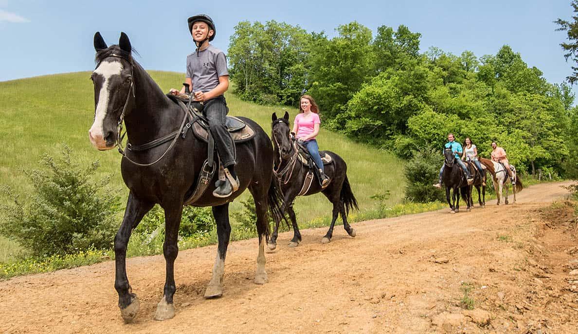 Horseriding Gallery 1 @1x